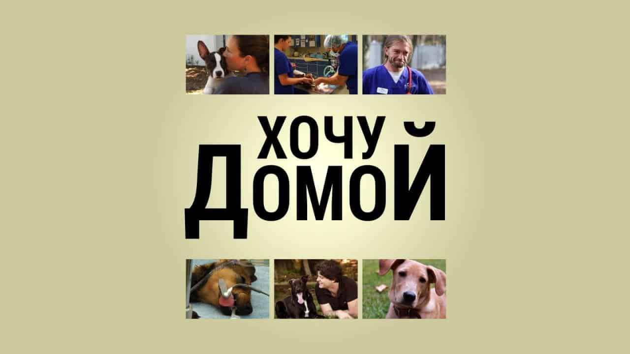 """Программа """"Хочу домой!"""" - Телеканал «Пёс и Ко»"""